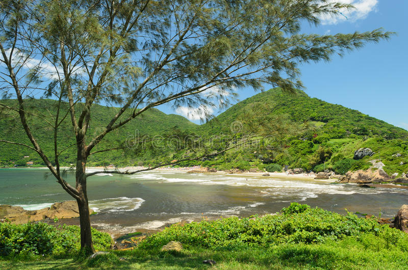 Árbol y mar imagen de archivo