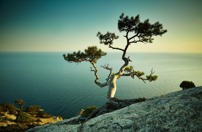 Árbol y mar en la puesta del sol Paisaje de Crimea imágenes de archivo libres de regalías