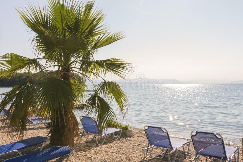 Árbol y mar 2 Fondo de la playa del verano foto de archivo libre de regalías