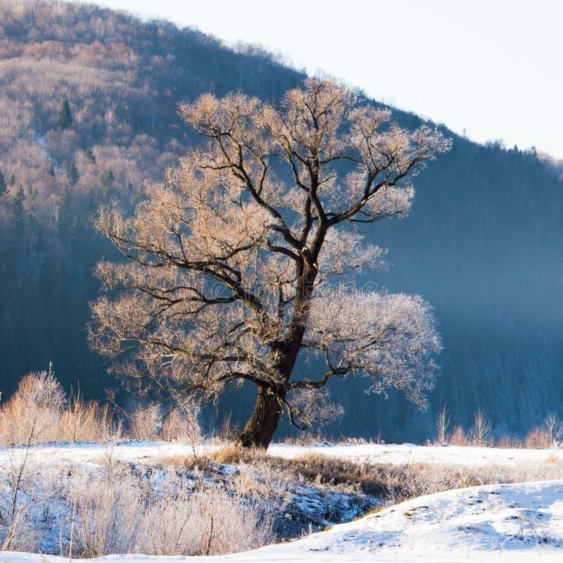 Árbol y montaña contra las escenas del invierno fotos de archivo libres de regalías