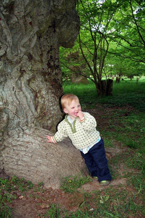 Árbol y niño de roble imagenes de archivo