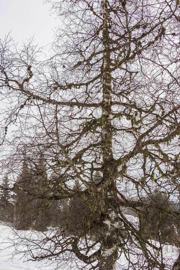 Árbol y nieve en las montañas imagenes de archivo