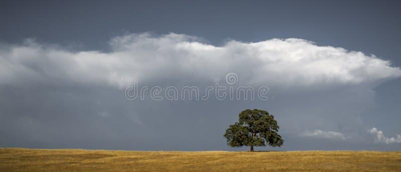 Árbol y nubes solitarios de roble imagenes de archivo
