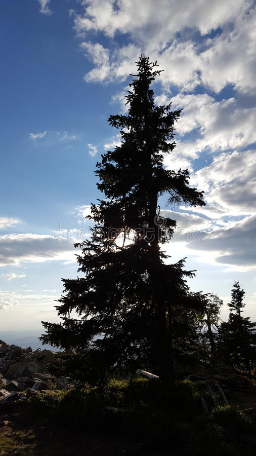 Árbol y nubes solos fotografía de archivo libre de regalías