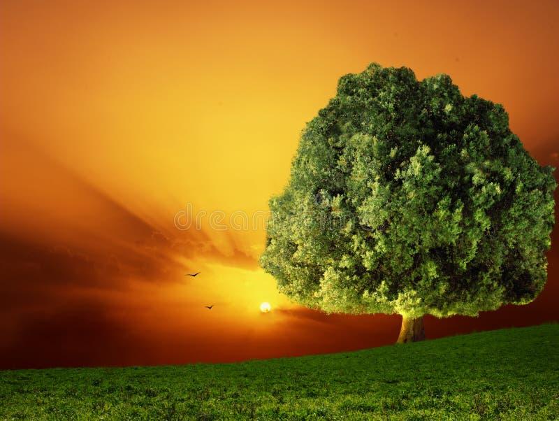 Árbol y puesta del sol foto de archivo