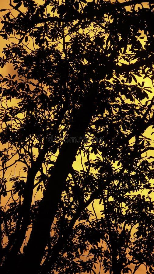 Árbol y puesta del sol en el fondo foto de archivo