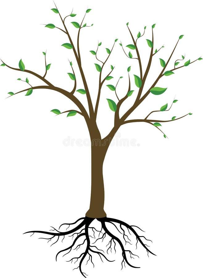 Árbol y raíces stock de ilustración