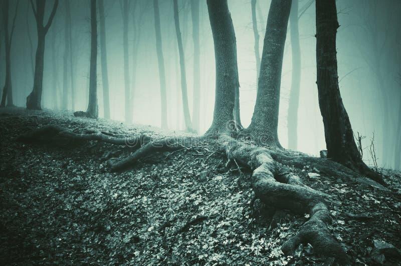 Árbol y raíces en la tierra en un bosque oscuro fotografía de archivo libre de regalías