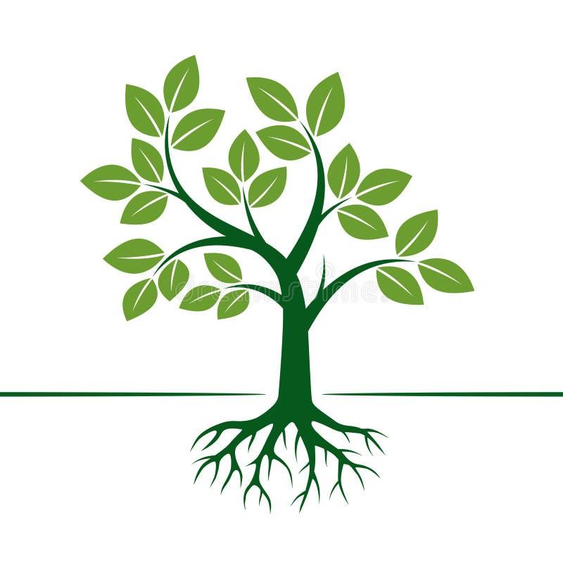 Árbol y raíces verdes del vector Ilustración del vector ilustración del vector