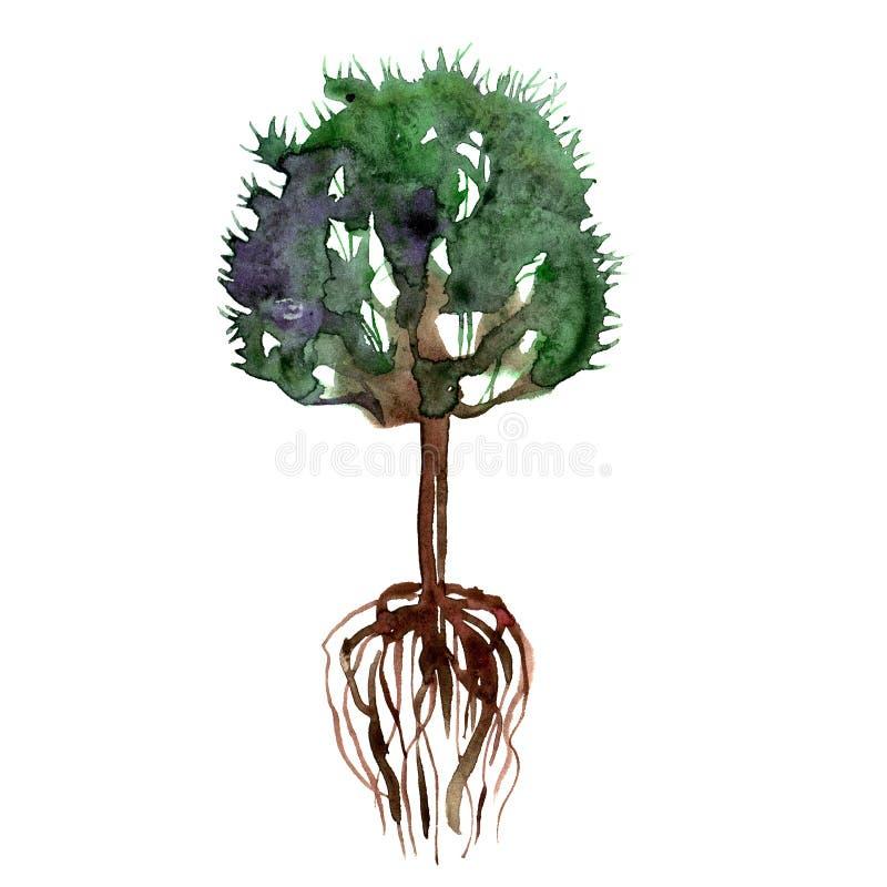 Árbol y raíces verdes pintados a mano del verano de la acuarela ilustración del vector