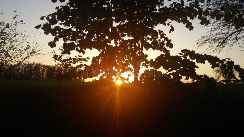 Árbol y sol imagenes de archivo
