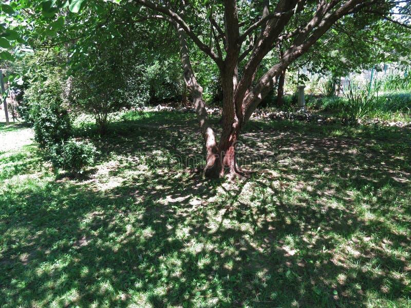 Árbol y sombras del verano fotos de archivo