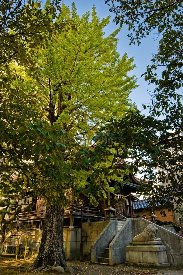 Download Árbol y templo del Ginkgo foto de archivo. Imagen de árbol - 7151330