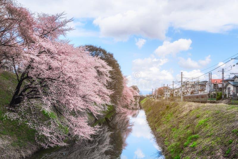 Árbol y trenes de la flor de cerezo en Japón con la luz para el backgroun imagen de archivo