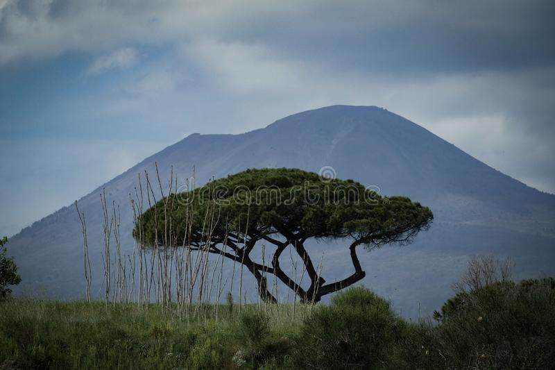 Árbol y Vesuvio vulcan en el fondo fotografía de archivo
