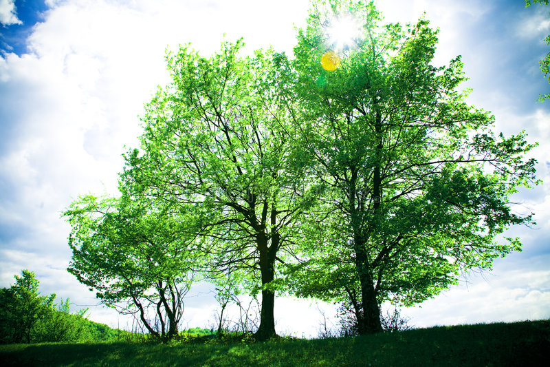 Árboles imagen de archivo libre de regalías