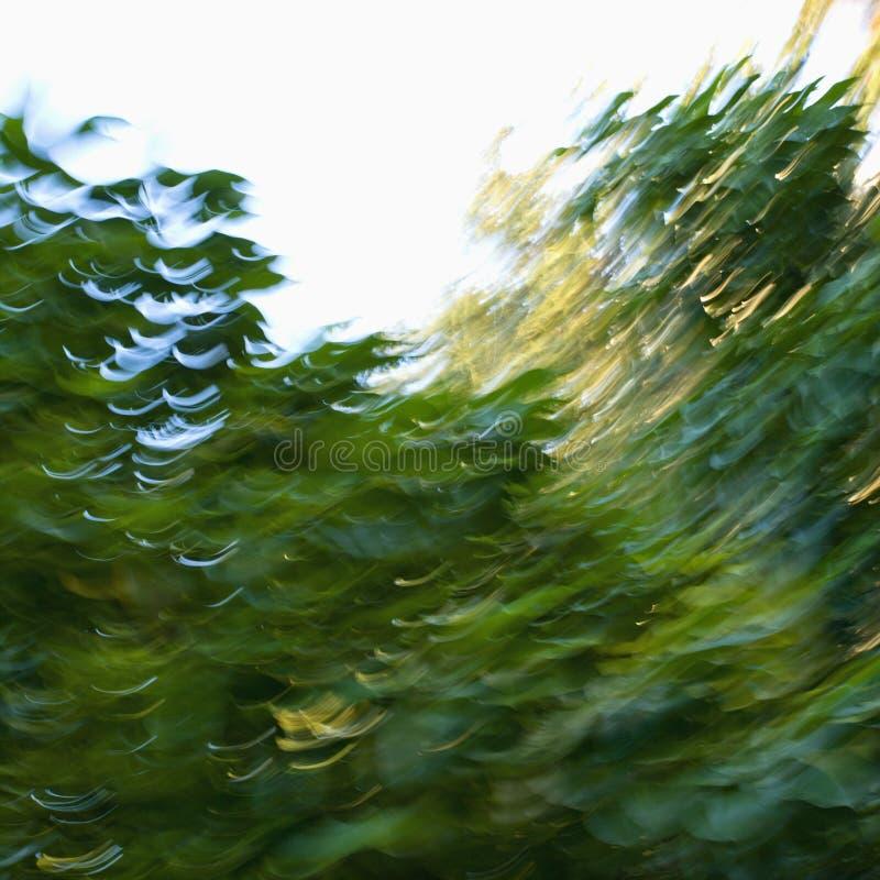 Árboles abstractos enmascarados. foto de archivo