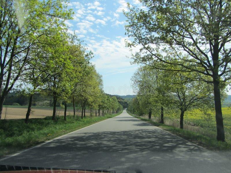 Árboles además del camino imagen de archivo