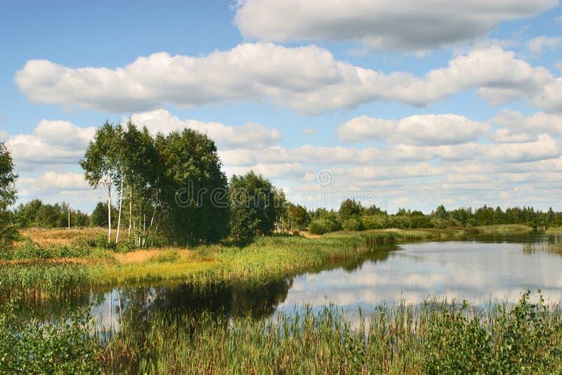 Download Árboles, agua imagen de archivo. Imagen de verde, campo - 1284185