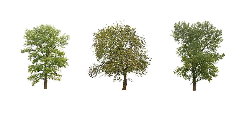 Árboles aislados fotos de archivo