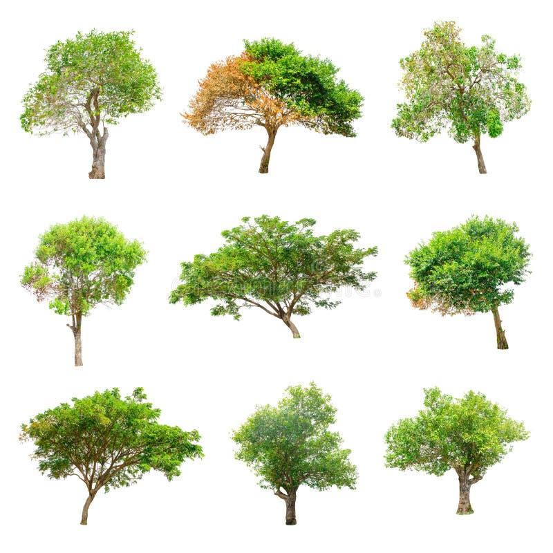 Árboles aislados en el fondo blanco fotos de archivo