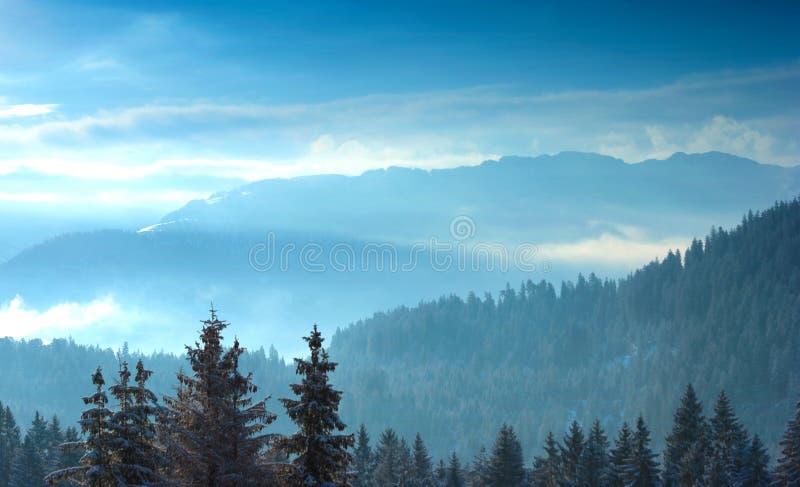 Árboles alpestres con nieve en la salida del sol imagenes de archivo
