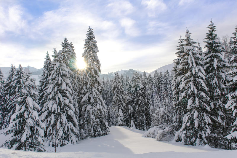 Árboles alpinos Nevado XI imagen de archivo libre de regalías