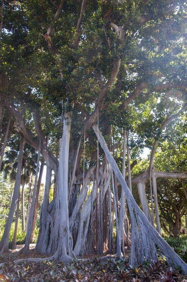 Árboles altos fotos de archivo libres de regalías