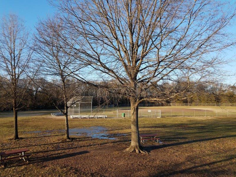 Árboles altos con las sombras y la hierba y el campo de béisbol imágenes de archivo libres de regalías