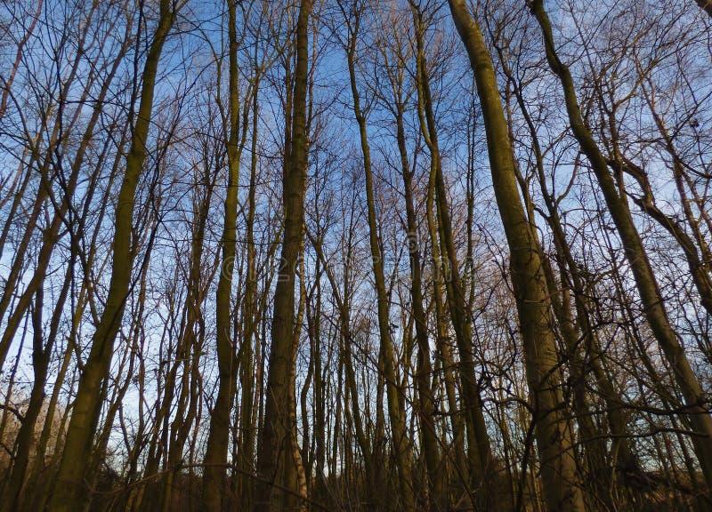Árboles altos en bosque imagenes de archivo