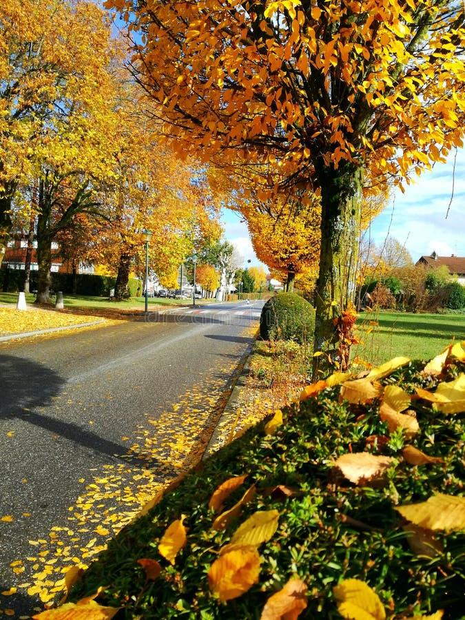 Árboles amarillos en la calle foto de archivo