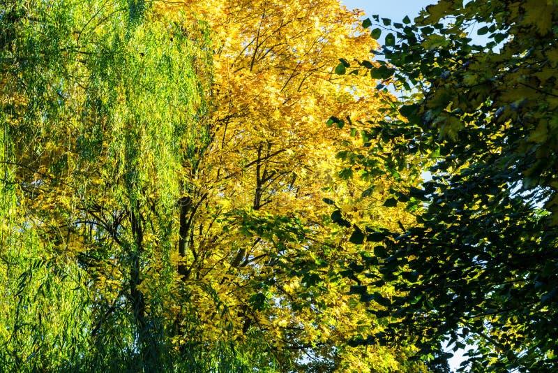 Árboles amarillos y verdes imagenes de archivo