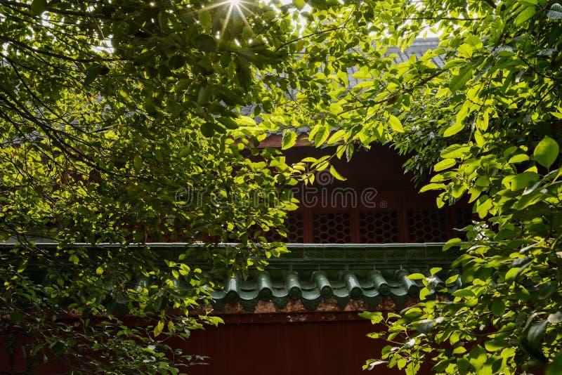 Árboles antes del edificio chino envejecido del traditonal en primavera soleada imágenes de archivo libres de regalías