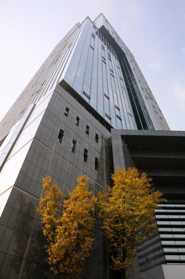 Árboles antes del rascacielos imágenes de archivo libres de regalías