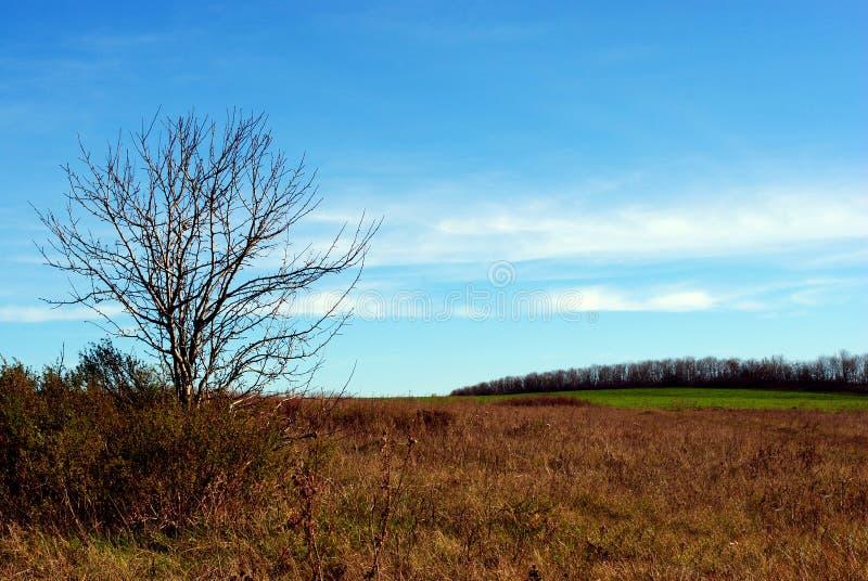 Árboles, arbustos e hierba al borde de un campo de la tierra negra fotos de archivo