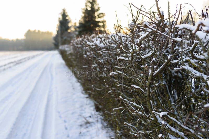 Árboles, arbustos marchitados y camino cubiertos por la nieve blanca durante triunfo foto de archivo libre de regalías