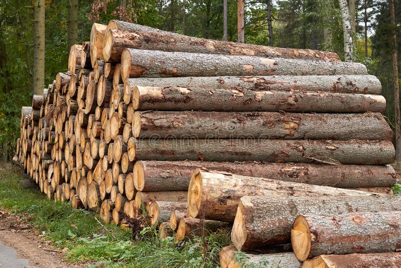 Árboles aserrados Los registros de madera apilaron Madera apilada en el bosque T imagen de archivo libre de regalías