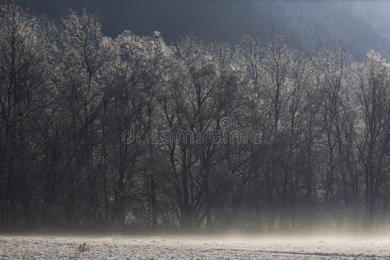 Árboles bajo la nieve en un llano del frío foto de archivo
