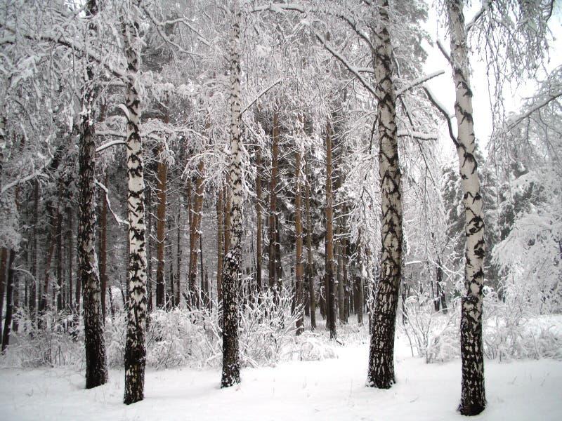 Árboles Bajo Nieve Fotografía de archivo