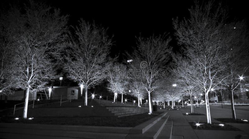 Árboles blancos imagen de archivo
