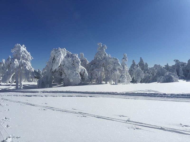 Árboles blancos después de nevar imágenes de archivo libres de regalías
