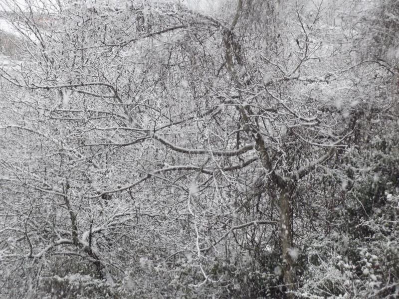 Árboles blancos Nevado en el jardín fotos de archivo