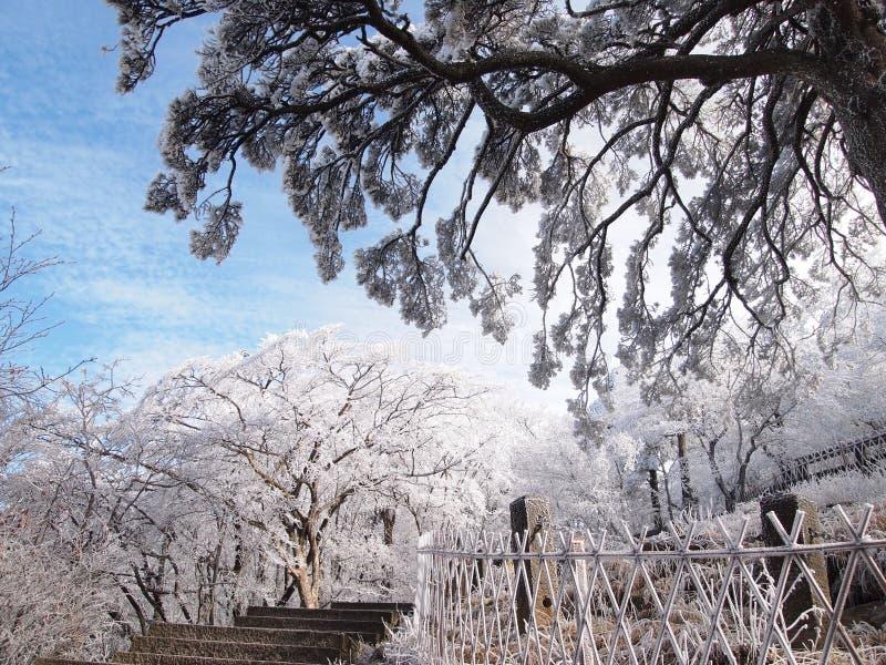 Árboles blancos y cercas blancas imagen de archivo
