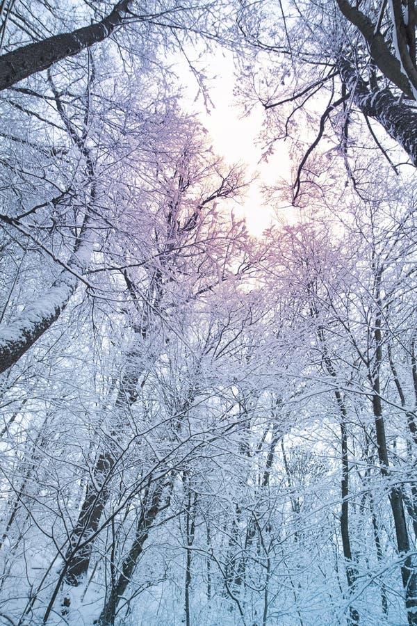 Árboles blancos y luz del sol en niebla Día nevoso reservado en un paisaje del invierno de la calma del bosque imagen de archivo