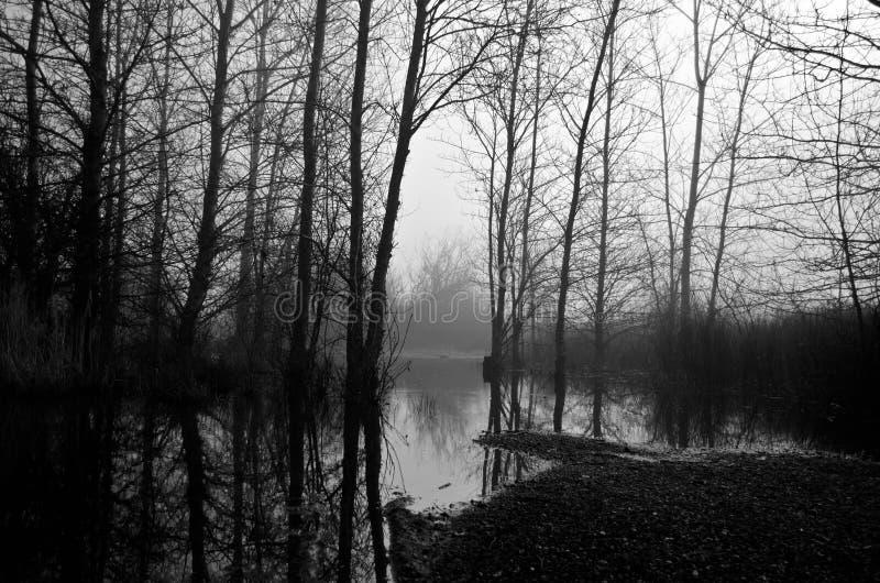 Árboles blancos y negros desnudos en mañana de niebla fotos de archivo libres de regalías