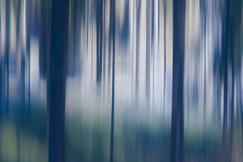 Árboles borrosos en bosque fotografía de archivo libre de regalías