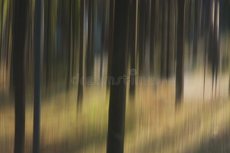 Árboles borrosos en bosque fotos de archivo libres de regalías