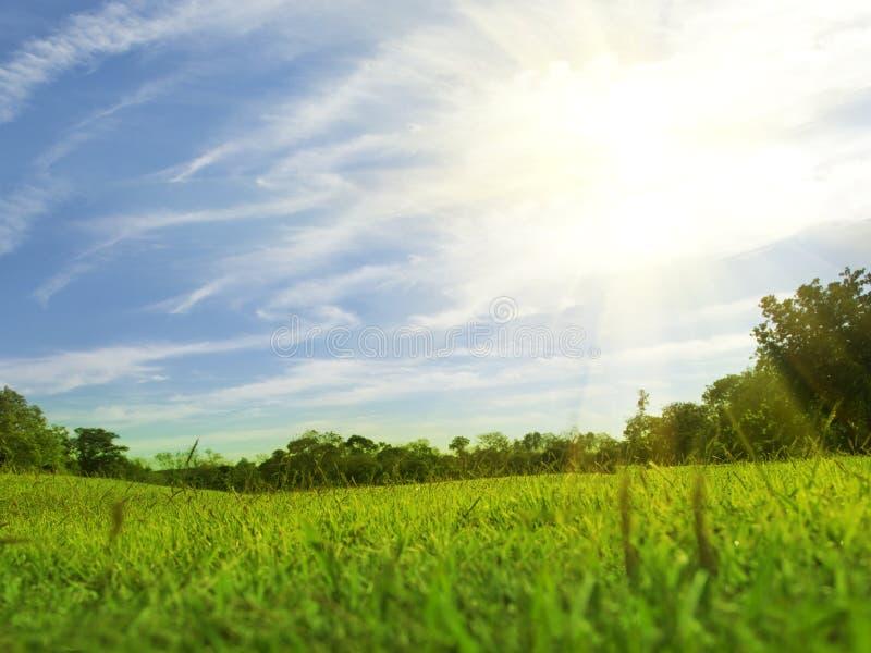 Árboles borrosos y luz hermosa del césped ancho verde de los jardines por la mañana fotografía de archivo