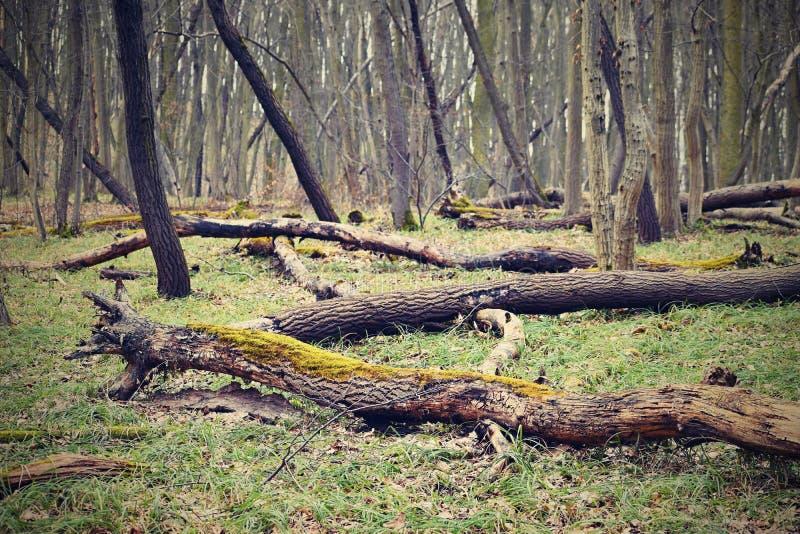 Árboles caidos en el fondo colorido natural del bosque imagenes de archivo
