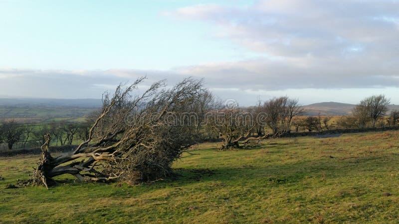 Árboles caidos en el parque nacional Devon del dartmoor foto de archivo